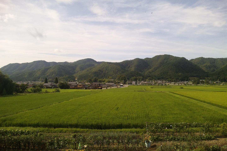 藤原邸裏側の田んぼの風景