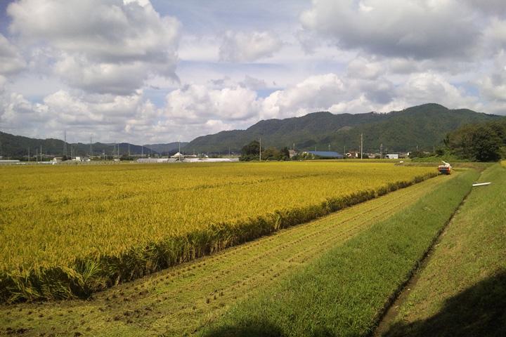 秋の田んぼとコンバイン