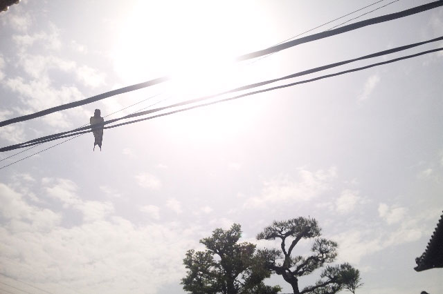 電線に止まるツバメの影