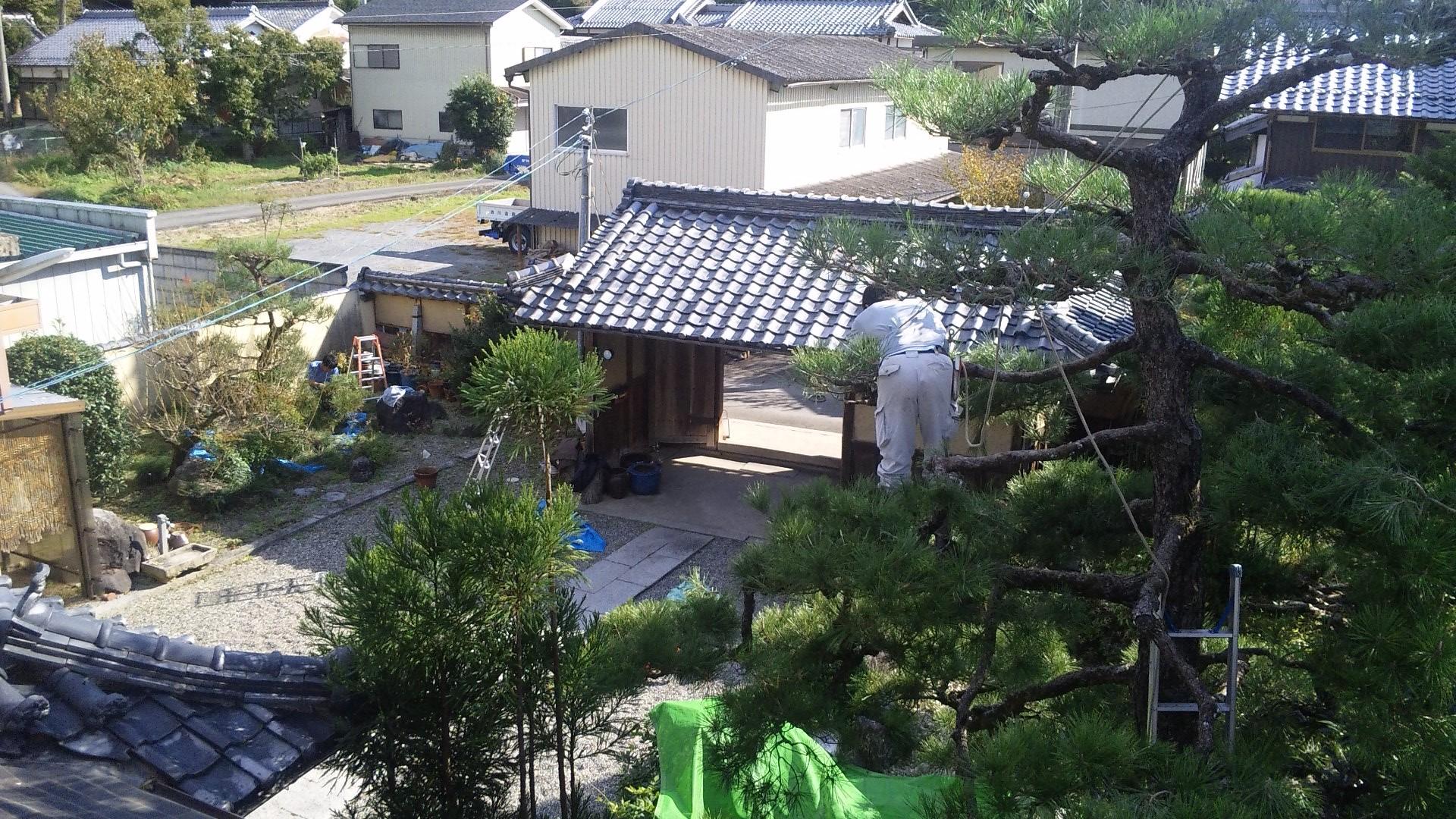 庭師さんが作業中の藤原邸の庭